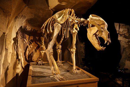 Grottes des Echelles (Chartreuse) + Museum of the Bear in Entremont-le-Vieux